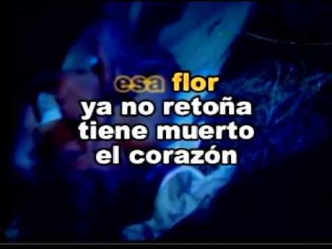 Pedro Infante   Flor Sin Retoño   Karaoke DF