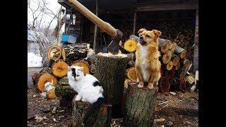 チェルノブイリ立入禁止区域で勝手に暮らすおじいさん / 動物に囲まれてのどかに暮らす   Kholo.pk