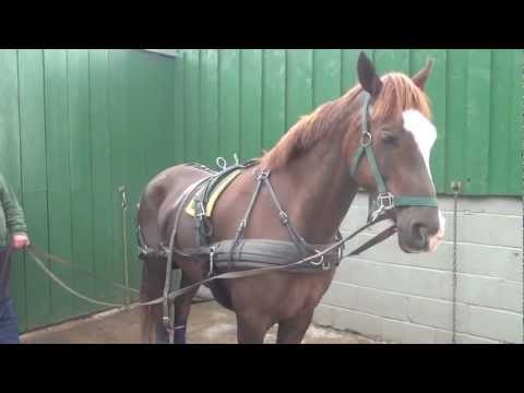 , title : 'P1 - Breaking your own horse to harness - retraining a horse that bolted pulling a tyre.