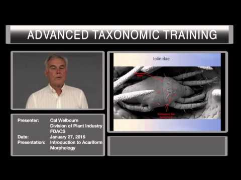 Introduction to acariform morphology