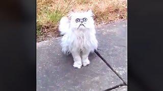 Во двор к мужику пришел кот и сильно напугал всех