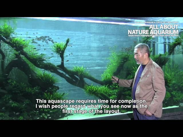 TAKASHI AMANO × SUMIDA AQUARIUM Final Episode
