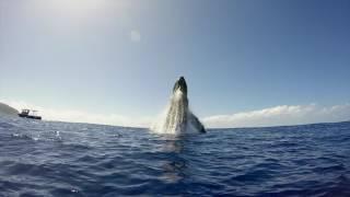 Смотреть онлайн Как красиво кит прыгает из воды
