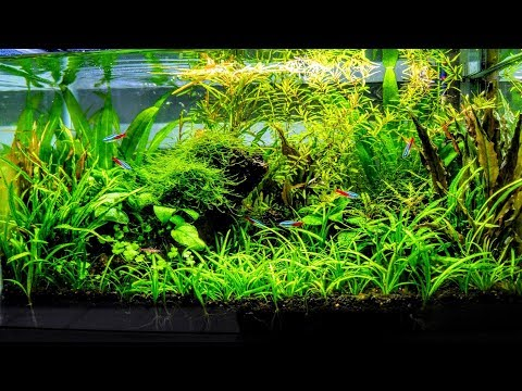 How To Aquascape A Low Tech Planted Aquarium part 2