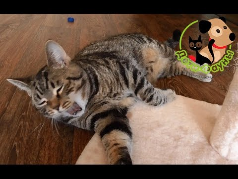 Неприятный запах у кошки из пасти, основные причины