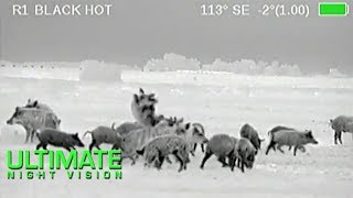 Wild Boar Hunting in Texas | 40 Hogs Down with the Armasight Zeus Thermal Scope
