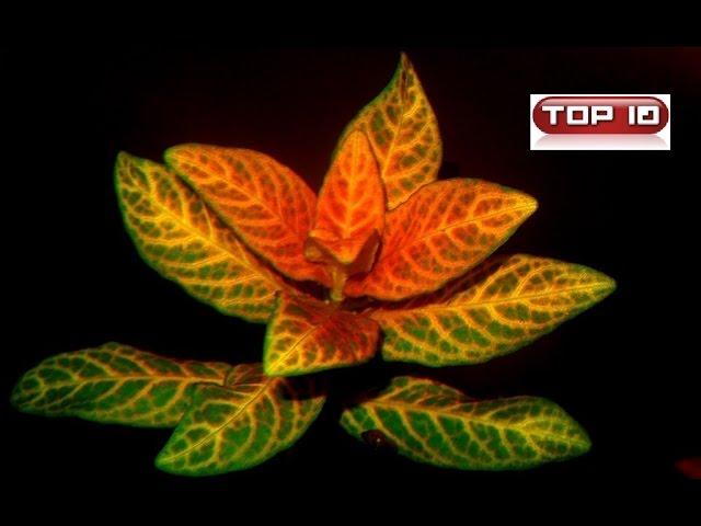 Top 10 piante più diffuse nell'acquario tropicale dolce.