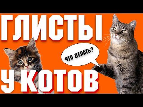 Что делать если у кошки глисты?   Почему появились глисты у кота?