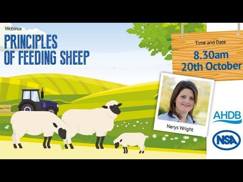 , title : 'NSA and AHDB: Principles of Feeding Sheep
