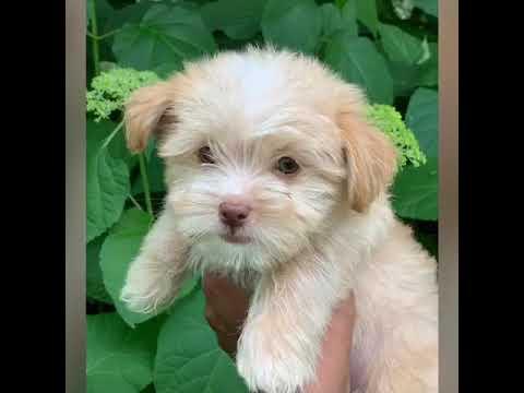 PAwFect Puppy Boutique