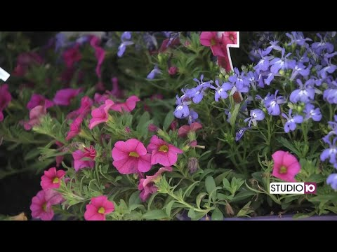 Check out the Better Homes & Gardens line of flowers and plants
