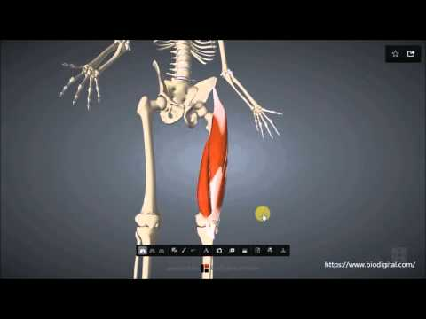 Rückenschmerzen einer Fehlgeburt Bedrohung