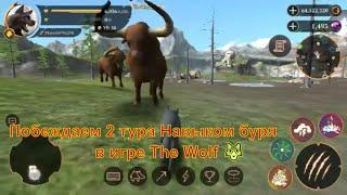 Побеждаем 2 тура Навыком буря в игре The Wolf 🐺 игра game  мультфильмы онлайн мультики для детей