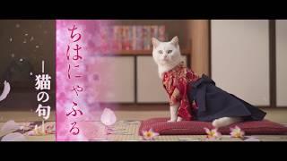 『ちはにゃふる-猫の句-』