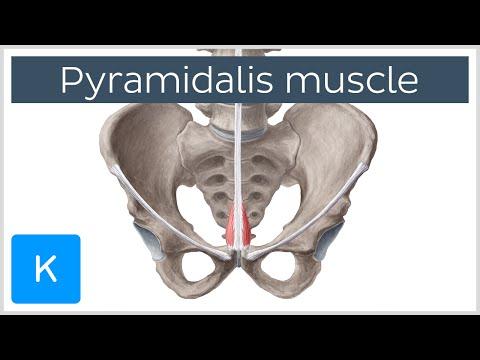 Ból w mięśniach mięśnia gruszkowatego niż leczyć