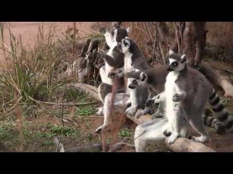 ときわ動物園PR動画(無音)