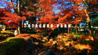 【AUTUMN IN JAPAN 2020】The Best Autumn Leaves Spots In Tokyo: Otaguro Park