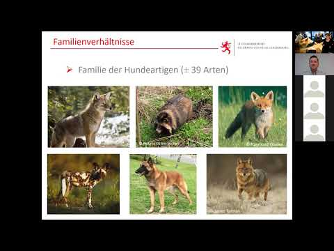 , title : 'Online Vortrag: Koexistenz Mensch-Wolf: Realismus oder Utopie?