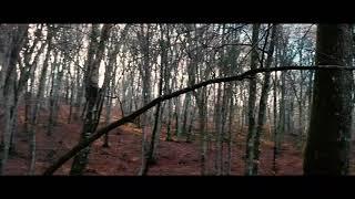 Dji Mavic Mini FPV -THE FOREST