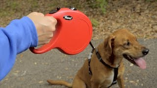 Flexi Dog Leashes   Chewy