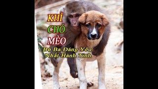 Khỉ chó mèo bộ ba chọc ghẹo nhau hài hước nhất hành tinh | Tú Nguyễn Channel
