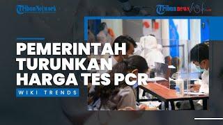 Banjir Kritikan, Pemerintah Turunkan Harga Tes PCR Jadi Rp 300 Ribu, Luhut: Permintaan Pak Jokowi