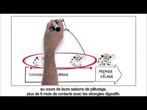 La saumure de la choucroute des parasites