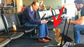 Corgi Escapes From Owner At Airport For Unanticipated Reason by Did You Know Animals?