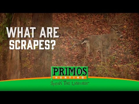 What are Deer Scrapes? video thumbnail