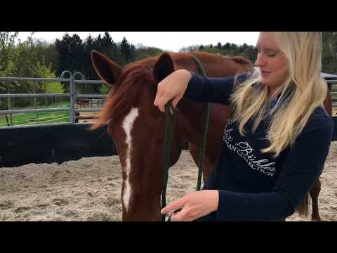 So geht's: Knotenhalfter anlegen Horsemanship