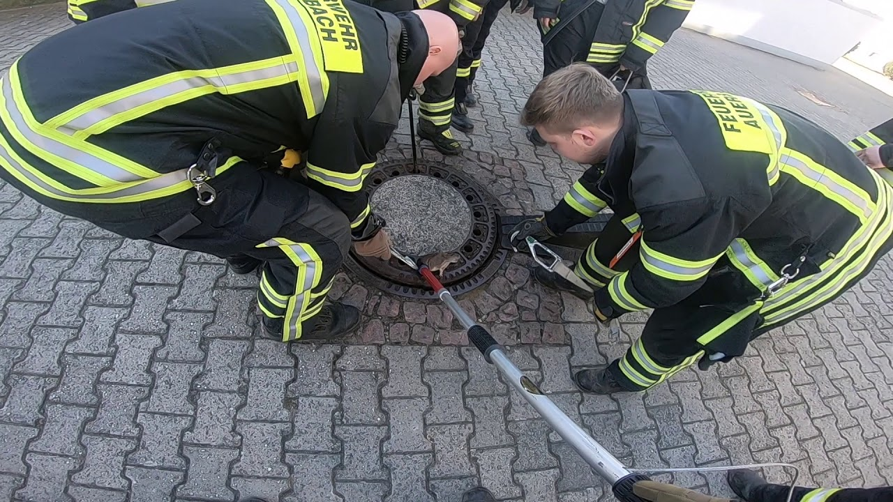 В Германии пожарные-волонтеры спасли застрявшую крысу