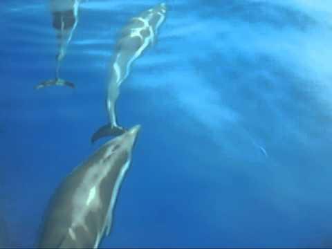 delfini a santa maria navarrese