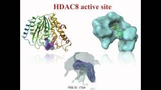 HDACs and pharmacophore-based virtual screening - Video abstract 81388