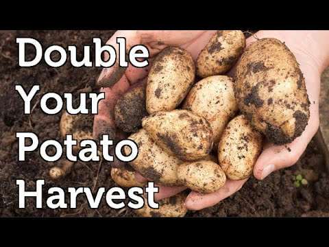 , title : 'Potato Growing Hack to Double Harvests