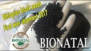 Receiving the Ethiopian black seeds