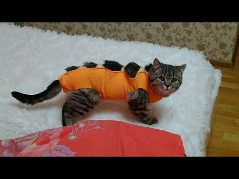 Мочекаменная болезнь кошек.Осложнение после УРЕТРОСТОМИИ.(лечение,советы)