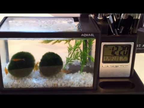 AQUAME von Aquael - ein Aquarium auf dem Schreibtisch? Warum nicht!