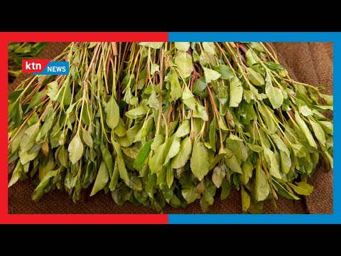 Promoting miraa: Parliament Agricultural committee in Embu to discuss the marketing of 'mogoka'