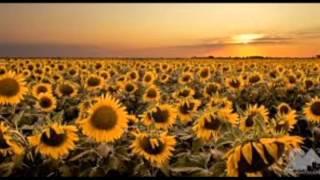 My Texas- Josh Abbott Band featuring Pat Green
