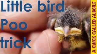 Little bird has a poo-trick