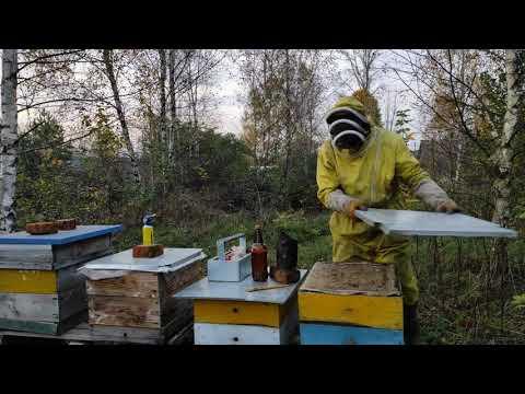 Пчеловодство.Как приготовить 3,5% раствор щавельной кислоты от клеща.Обработка пчёл от варроатоза.