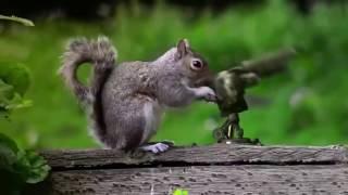 Top những video hài hước gây cười nhất của động vật