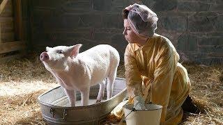 一头小猪,害怕自己被主人做成熏肉,于是努力活成主人都舍不得杀的傲娇模样