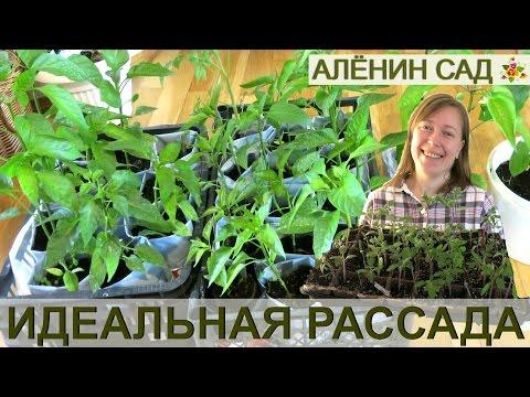 ИДЕАЛЬНАЯ РАССАДА и правильные сроки посева на рассаду томатов, перца и баклажанов