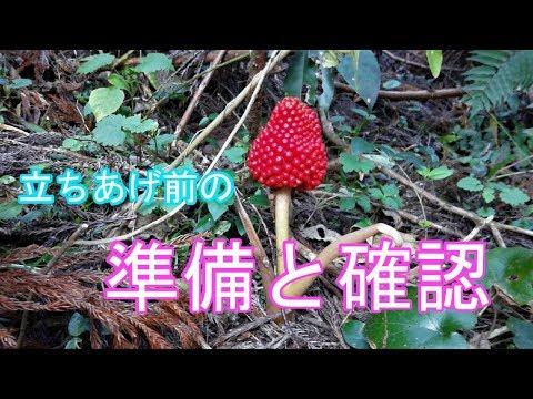 【苔】ホウオウゴケの自生環境の再確認