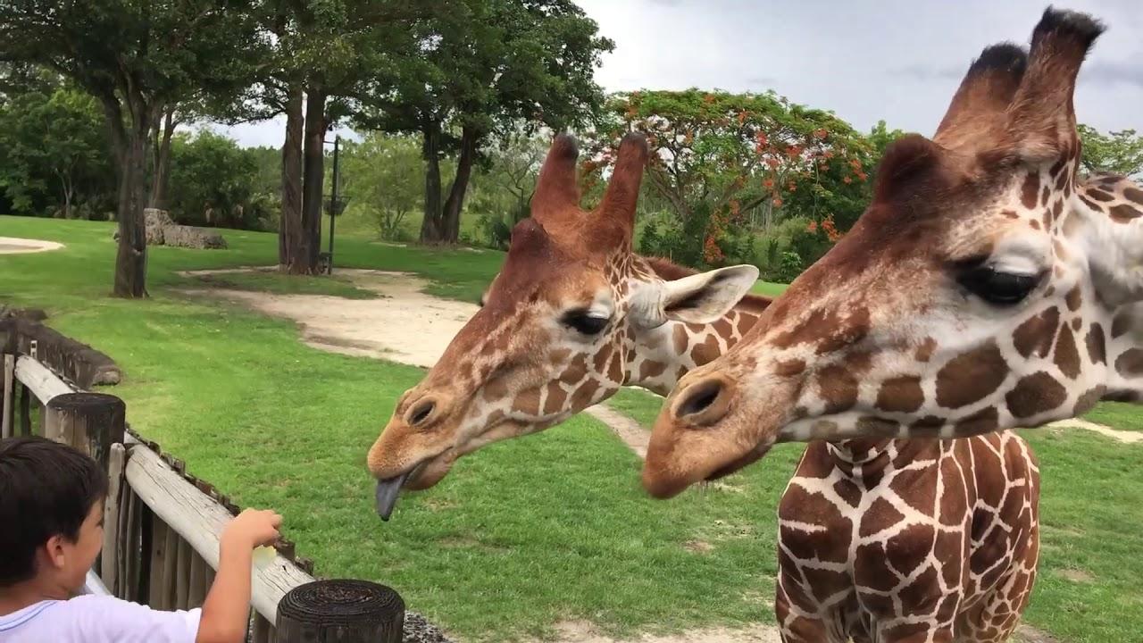 """En el zoo de Miami hacen """"polvo mágico"""" con excremento de animales"""