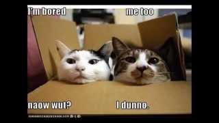 Animal Humor Funny