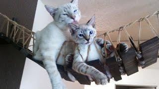 Лазалки для кошек своими руками/Cat climbing frame