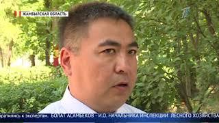 В нескольких регионах Казахстана массово гибнет рыба