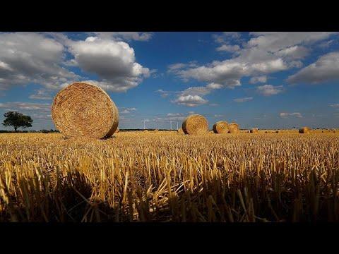 Γερμανία: Αποζημιώσεις λόγω ξηρασίας διεκδικούν οι αγρότες…